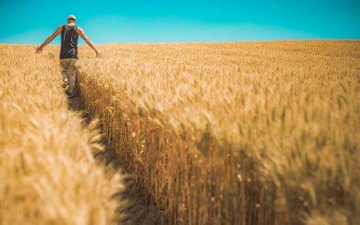 """Tra i campi di grano """"ti dà la vita"""""""